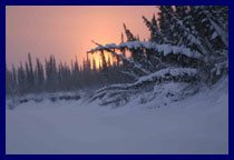 The sun sets behind boreal larch and the Mackenzie's shoreline